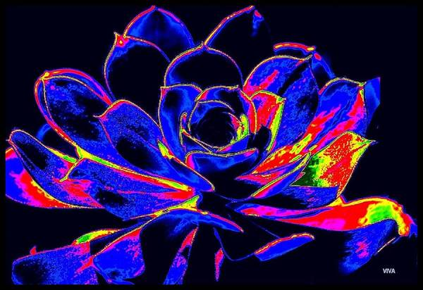 Digital Art - Cactus - One - Collaboration by VIVA Anderson