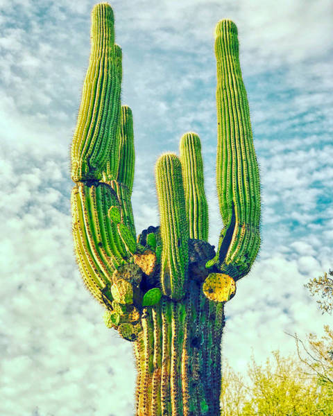 Photograph - Cactus Shot by Ants Drone Photography