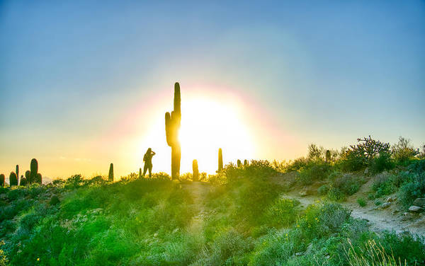 Photograph - Cactus Sunset by Ants Drone Photography