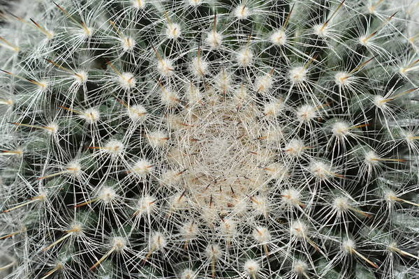 Photograph - Cactus by Thomas Olsen