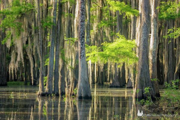 Photograph - Caddo Swamp 1 by David Cutts