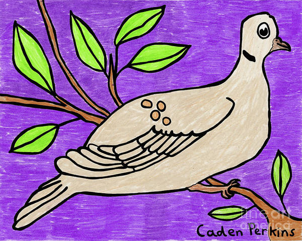 Drawing - Caden's Mourning Dove by Amy E Fraser and Caden Fraser Perkins