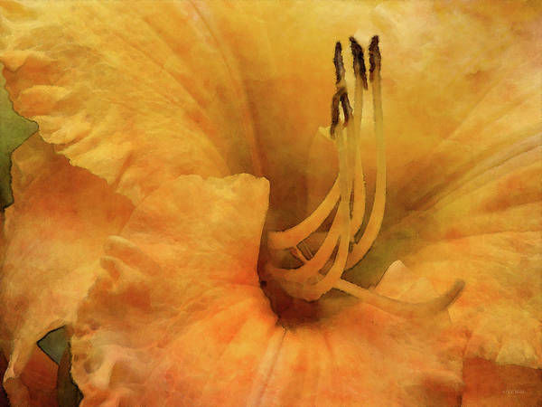 Photograph - Cadmium Daylily 4300 Idp_2 by Steven Ward