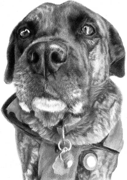 Pup Drawing - #cadydog Black And White by Lorraine Zaloom