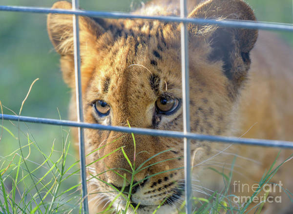 Photograph - Caged by Dheeraj Mutha