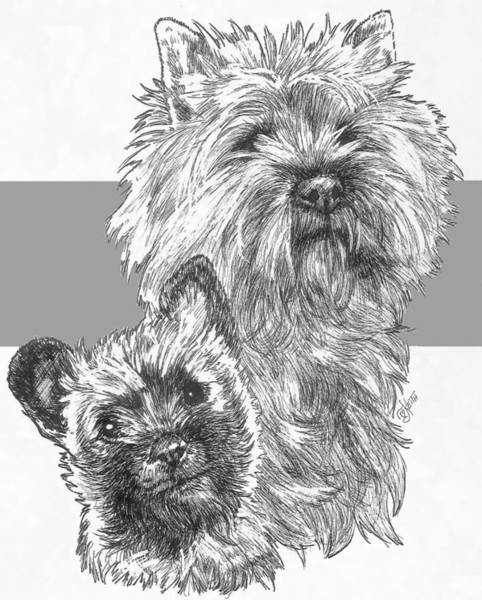 Drawing - Cairn Terrier And Pup by Barbara Keith