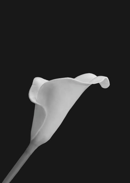 Photograph - Cala Lily Ca Bw by Jim Dollar