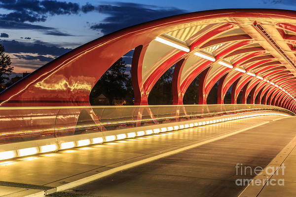 Wall Art - Photograph - Calgary At Night by Elena suvorova