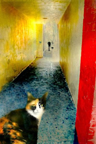Wall Art - Photograph - Calico Corner by Diana Angstadt