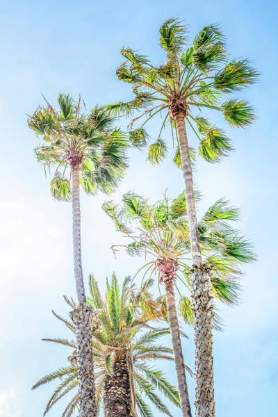 Photograph - California Dreaming Palm Trees by Gene Parks