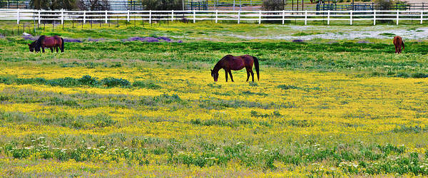 Photograph - California Grazing by Glenn McCarthy Art and Photography