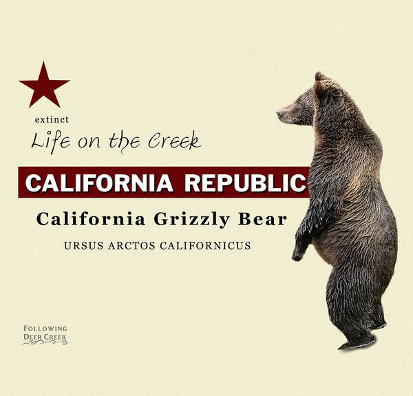 Digital Art - California Grizzly by Lisa Redfern