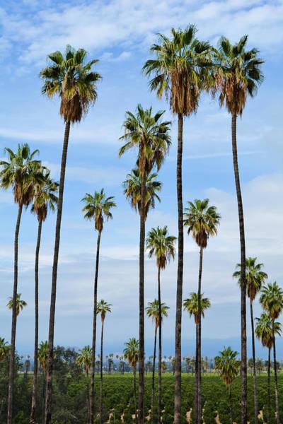 Photograph - California Orange Groves by Kyle Hanson