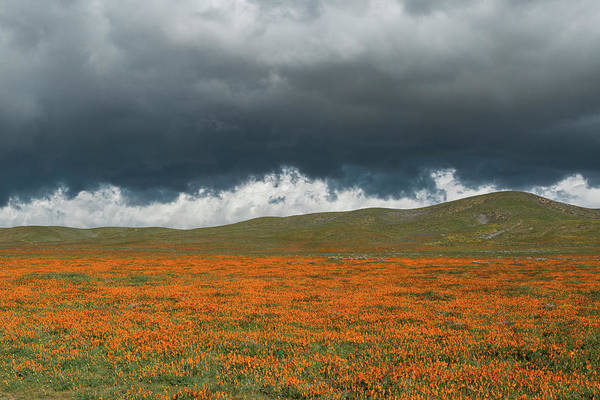 Wall Art - Photograph - California Poppies Bloom Beneath Stormy by Brenda Tharp