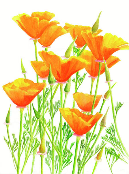 Freeman Wall Art - Painting - California Poppies by Sharon Freeman