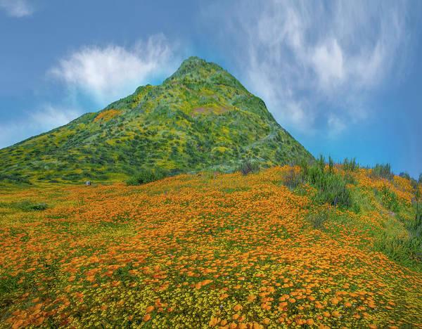 Photograph - California Poppy Spring Bloom, Diamond by Tim Fitzharris