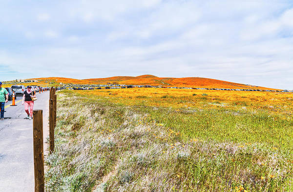 Photograph - California Poppy Superbloom 2019- Season Ending by Gene Parks