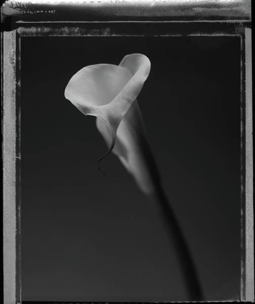 Calla Photograph - Calla Lilly by T Scott Carlisle