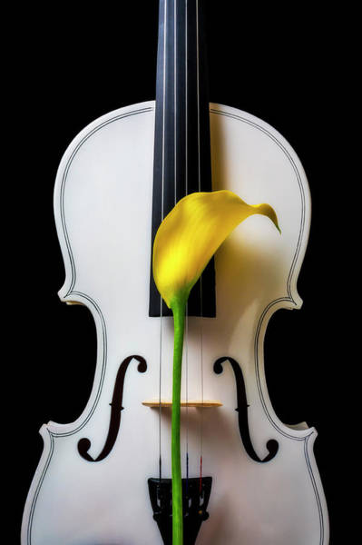 Wall Art - Photograph - Calla Lily And White Violin by Garry Gay