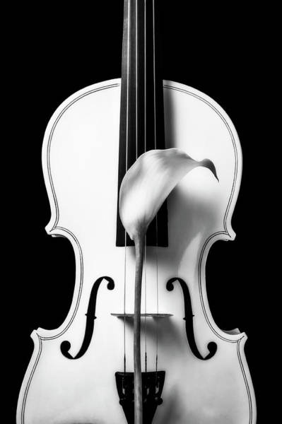 Wall Art - Photograph - Calla Lily And White Violin In Black And White by Garry Gay