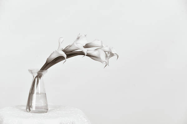 Photograph - Calla Love by Michelle Wermuth