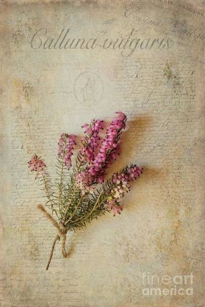 Heather Wall Art - Mixed Media - Calluna Vulgaris by John Edwards
