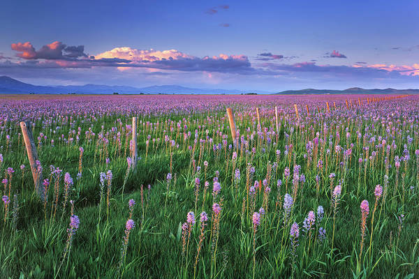 Wall Art - Photograph - Camas Marsh Spring Sunrise by Leland D Howard
