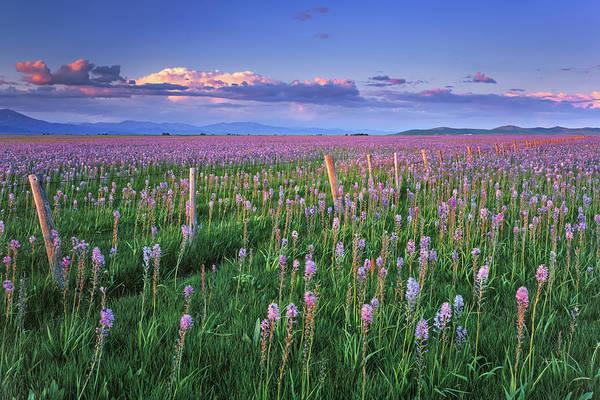 Photograph - Camas Marsh Spring Sunrise by Leland D Howard