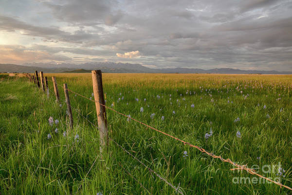 Wall Art - Photograph - Camas Prairie Light by Idaho Scenic Images Linda Lantzy