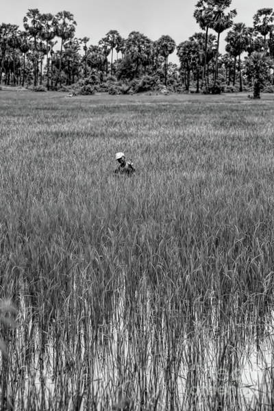 Wall Art - Photograph - Cambodian Boy Rice Fields Black White  by Chuck Kuhn