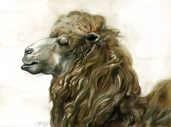 Painting - Camel And Its Winter Coat by Alfred Ng