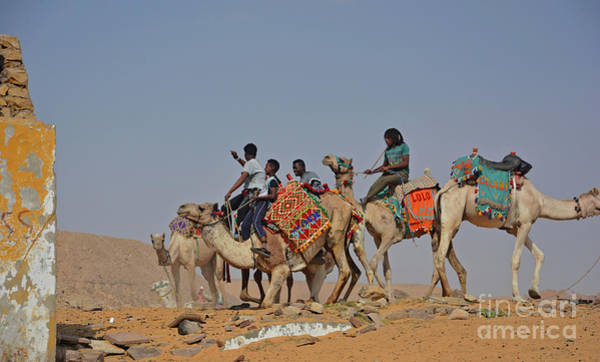 Wall Art - Photograph - Camel Boys by Andrea Simon