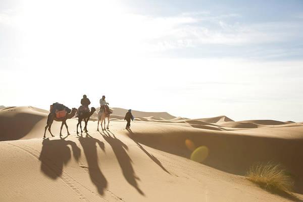 Wall Art - Photograph - Camel Caravan In Sahara Desert by Steve Casimiro