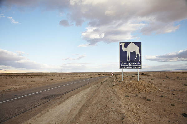 Tunisia Wall Art - Photograph - Camel Crossing Warning Sign At The by Stefan Schuetz / Look-foto