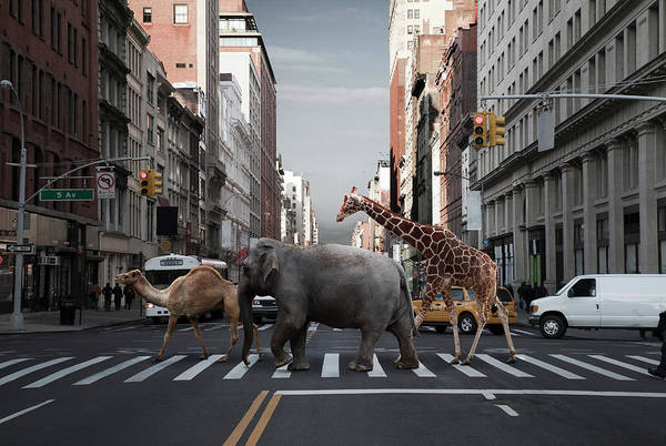 Car Part Photograph - Camel, Elephant And Giraffe Crossing by Thomas Jackson