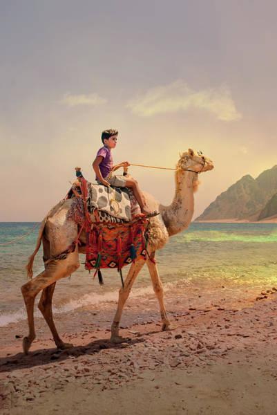 Photograph - Camel by Gouzel -