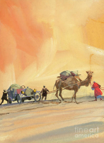 Wall Art - Painting - Camel Pulling A Vintage Automobile by Ferdinando Tacconi