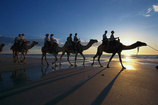 Broome Photograph - Camel Ride Along Cable Beach, Broome by Michael Boyny / Look-foto