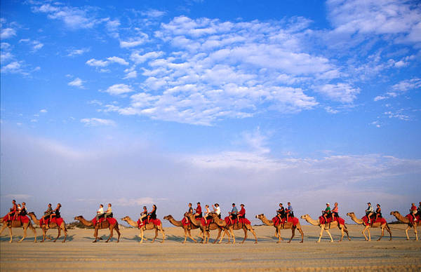 Broome Photograph - Camel Ride On Beach, Low Angle View by John Banagan