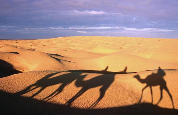 Tunisia Wall Art - Photograph - Camel Ride Shadows Across Sahara, Ksar by Christopher Groenhout