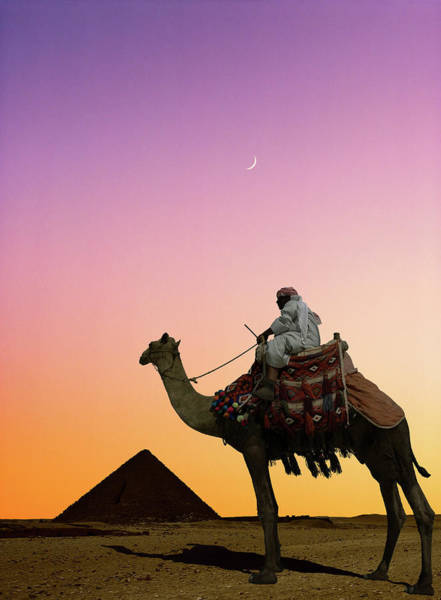 Domestic Animals Photograph - Camel Rider And Pyramid At Sunset by Andy Sotiriou