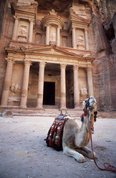 Hiding Photograph - Camel Sitting At The Entrance To The by Cultura Exclusive/philip Lee Harvey