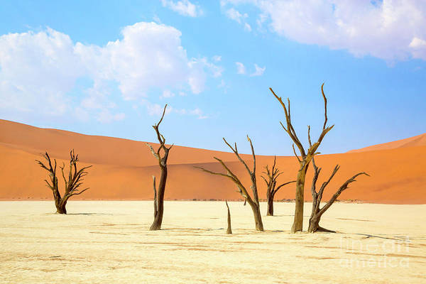 Wall Art - Photograph - Camel Thorn Trees In Sossusvlei, Namibia by Julia Hiebaum