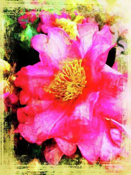 Photograph - Camellia Pinks by Alice Gipson