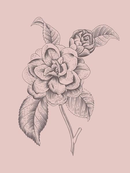 Bouquet Mixed Media - Camellia Blush Pink Flower by Naxart Studio