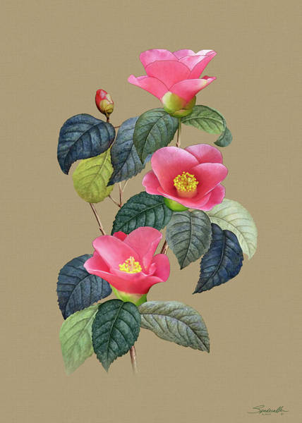 Wall Art - Digital Art - Camellia Japonica by Spadecaller