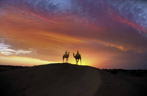 Working Photograph - Camels At Sunset by Images Etc Ltd