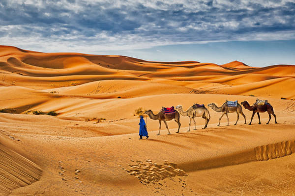 Photograph - Camels In The Sand Dunes #2 - Morocco by Stuart Litoff