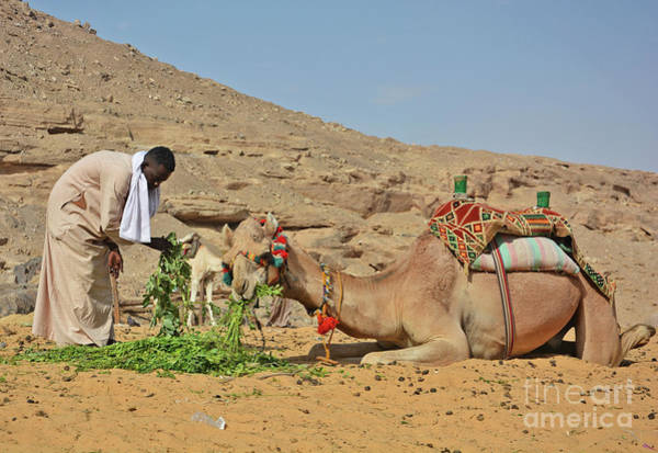 Wall Art - Photograph - Camel's Lunch by Andrea Simon