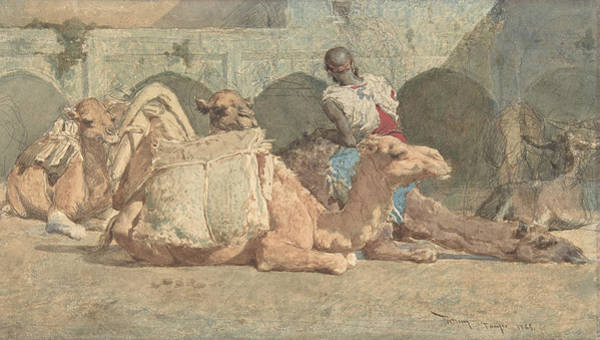 Drawing - Camels Reposing, Tangiers by Maria Fortuny